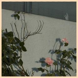 Soft Kill - Savior - LP